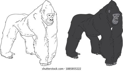 Gorilla vector drawing animal vector drawing, cartoon vector, line art and color