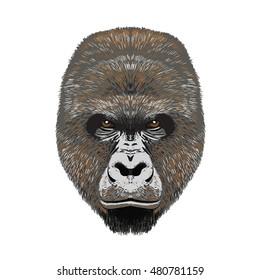 gorillas angy head face