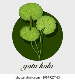 Gotu Kola leaves ( Asiatic pennywort, Indian pennywort, Centella asiatica ) isolated on white background. Icon vector illustration.