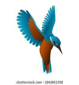 gradient kingfisher bird vector illustration isolated on white background