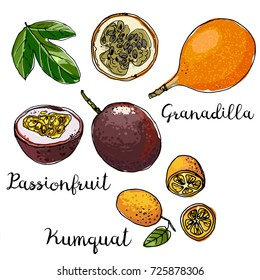 Granadilla, passionfruit, kumquat. Fruits drawn by a line on a white background. Fruits from Thailand. Food sketch lines.