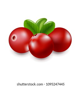 Granberry With White background With Gradient Mesh, Vector Illustration