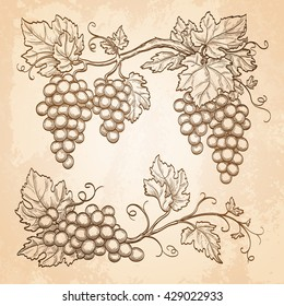 Grape branches on old paper background. Hand drawn vector illustration. Retro style.