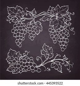 Grape branches. Sketch with chalk on blackboard background. Hand drawn vector illustration. Retro style.