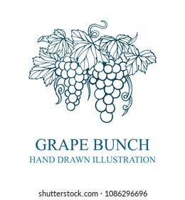 Grape bunch hand drawn sketch. Grape and vine vintage style vector illustration. Wine theme design template.