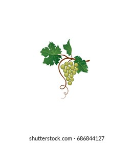 Grape bunch with leaves. Floral wine retro sign. Garden background. Wine making berry icon