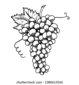 Grape bunch monochrome sketch style illustration. Hand drawn grape with leaves, vintage style