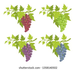 Grape bunches. Decorative elements. Red, blue and green varieties. Grapevines green leaves decor. Vector flat Illustration template.