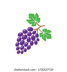 Grape bunches and leaves, vector illustration