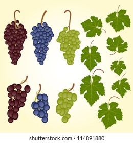 Grape bunches and leaves vector set
