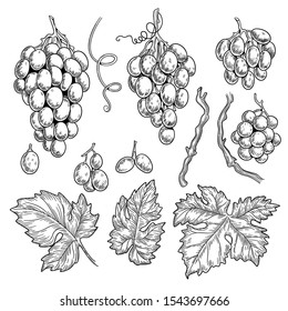 Grape doodle. Wine symbols for restaurant menu graphics engraving grape leaves vector hand drawn collection. Grape vine for vintage restaurant menu illustration
