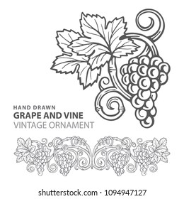 Grape. Hand drawn grape and vine engraving style illustration.  Bunch of grapes vector design element. Grape and vine logo and ornament.