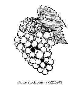Grape illustration in engraving style isolated on white background. Design element for logo, label, emblem, sign, poster, label. Vector illustration
