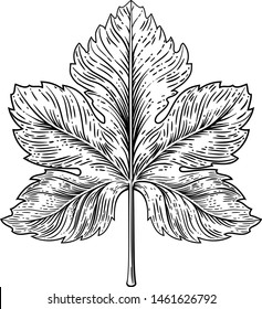 A grape leaf design element in a woodcut engraving style