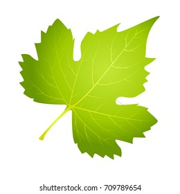 Grape leaf on white background, Vector illustration