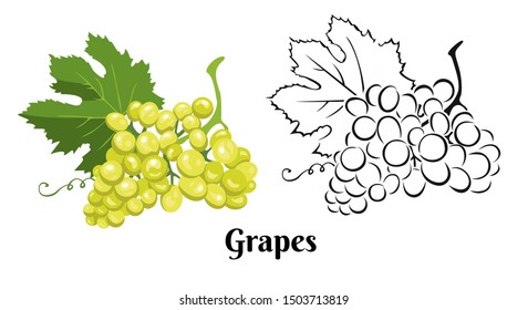 Grape set isolated on white background. Color illustration of green ripe bunch of berries with leaf and black and white contour image. Vector outline and silhouette.