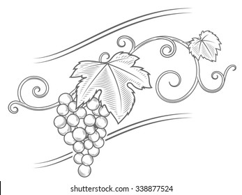 Grape vine branches ornament vector illustration. Engraving style. Brown color