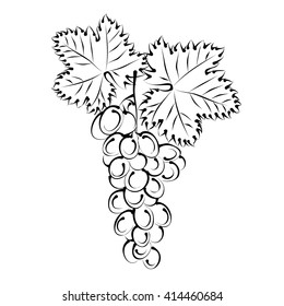 Grape vine with bunch of grapes. Hand drawn vector illustration (silhouette sketch).