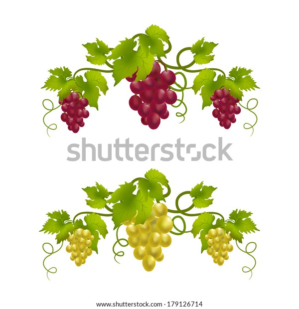 Grape Vine Monogram Vector Illustration Stock Vector