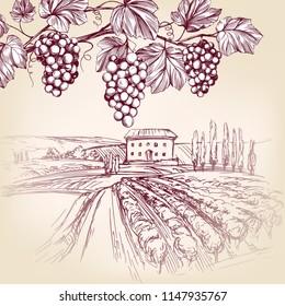grape vine, Vineyard, grape hand drawn vector illustration realistic sketch