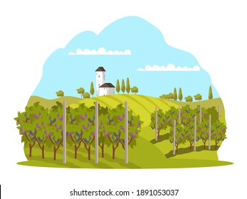 Grape vineyards in winery landscape background. Wine production at farm vector illustration. Growing grapes for producing harvest with trees. Rural scene with church and meadow.