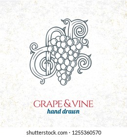 Grape and wine ornament.  Hand drawn grape and vine engraving style illustration.  Bunch of grapes sketch drawing.
