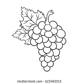 Grapes drawing. Isolated on white background. Hand drawn in a graphic style. Vegetarian food. Great for menu, label, poster, print.