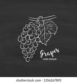Grapes fruit drawing. Sketch of grapes with chalk on blackboard. Vector isolated illustration