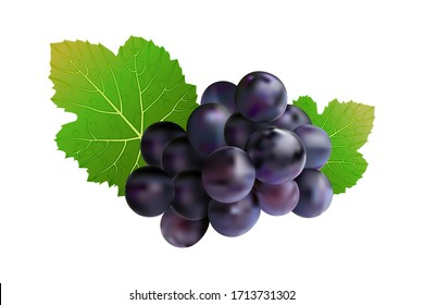 Grapes isolated on white background. Wine grapes icon. Bunch of purple grapes with leaf. Blue grape cluster with green leaves. For design element, label, cards. menu, poster, banner. Stock vector