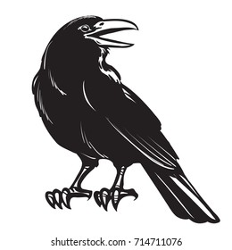 Graphic black and white crow isolated on white background. Old and wise bird. Raven Halloween character. Hand drawn sketch style vector illustration.