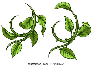 Graphic cartoon green rose branch, stem with leaves and thorns. Isolated on white background. Vector icon set.