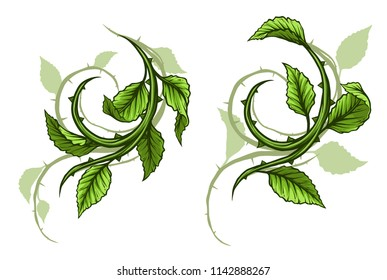 Graphic cartoon green rose branch, stem with leaves and thorns and shadows. Isolated on white background. Vector icon set.