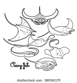 Graphic cramp fish collection. Vector electric Manta ray isolated on white. Sea and ocean creatures. Coloring book page design for adults and kids