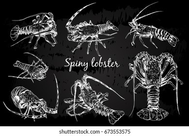 Graphic crayfish drawn in line art style. Spiny or rocky lobster. Sea and ocean creature on chalkboard.