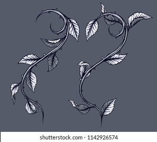 Graphic detailed black and white rose branch, stem with leaves and thorns. Isolated on gray background. Vector icon set. Vol. 3