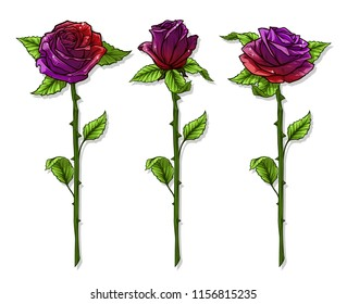 Graphic detailed cartoon violet and red roses flower with stem and leaves. Isolated on white background. Vector icon set.