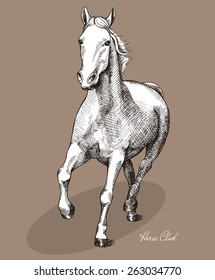 Graphic drawing horse