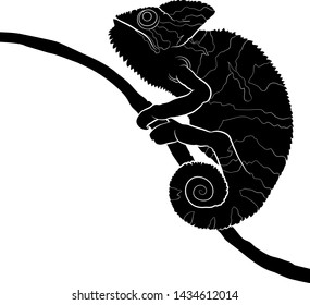 Graphic drawing. Silhouette of a chameleon on branch. Vector