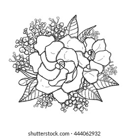 Graphic floral card. Vector gardenia and gypsophila leaves and flowers in cute vignette isolated on white background. Coloring book page design for adults and kids