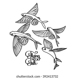 Graphic flying fish collection drawn in line art style. Sea and ocean creature isolated on white background. Coloring book page design for adults and kids