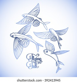 Graphic flying fish collection drawn in line art style. Sea and ocean creature isolated on white background. Coloring book page design