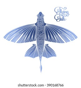 Graphic flying fish drawn in line art style. Top view. Sea and ocean creature isolated on white background. Coloring book page design