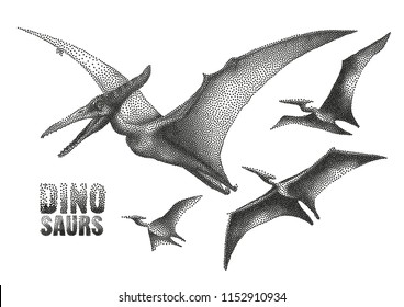 Graphic flying pterodactyls. Vector dinosaurs isolated on white background. Animal of the prehistoric period in stippling technique