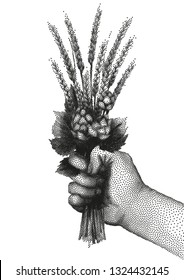 Graphic hand holding the bunch of malt and hop drawn in stippling technique