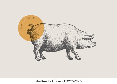 Graphic hand-drawn pig on a light background. Retro engraving with farm animal for menu restaurants, for packaging in markets and shops. Vector vintage illustrations.