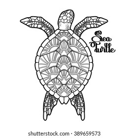 turtle drawing images stock photos vectors shutterstock
