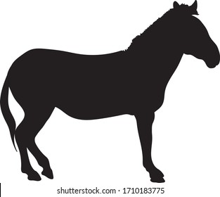 Graphic illustration of a black silhouette of a standing zebra in isolate on a white background .Vector illustration.
