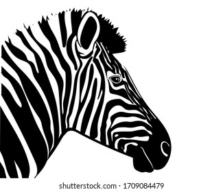 Graphic illustration of a portrait of a zebra in profile. Vector illustration.