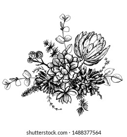 Graphic illustration with protea and succulents. Vector illustration. Manual graphics.