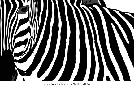 Graphic illustration representing the mantle of a zebra
